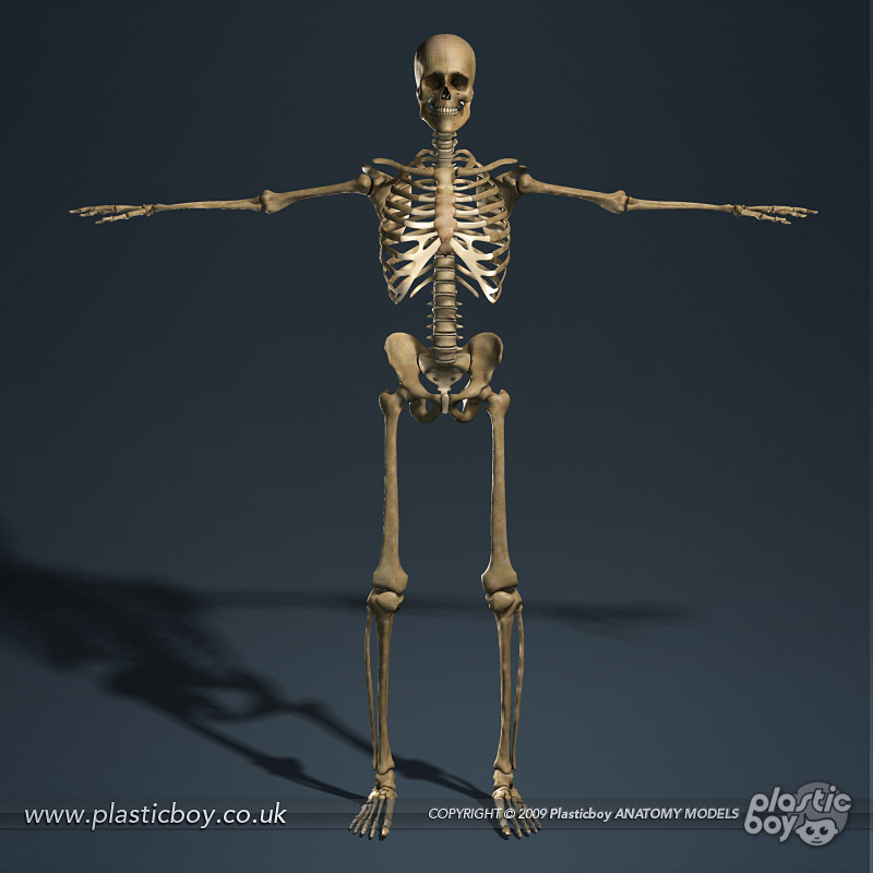 Skeletal system innovations Create 3d model online free